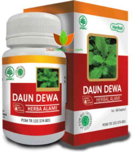 Obat Herbal Indo Utama daun dewa herbal indo utama obat daun dewa untuk tumor