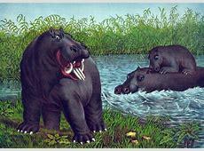 Vintage Hippopotamus Illustration Free Stock Photo ... Free Vintage Clip Art Images