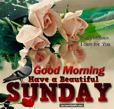 sunday good morning beautiful good morning have a beautiful sunday quote with flowers