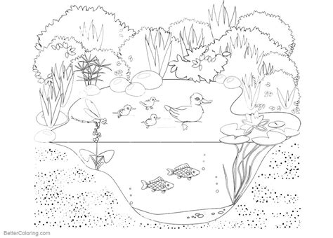 pond life coloring pages animals  plants