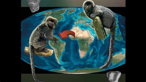 ape mind mind new mind emotional fossils and the evolution of the human spirit books fossil peruvian monkey may originated in africa