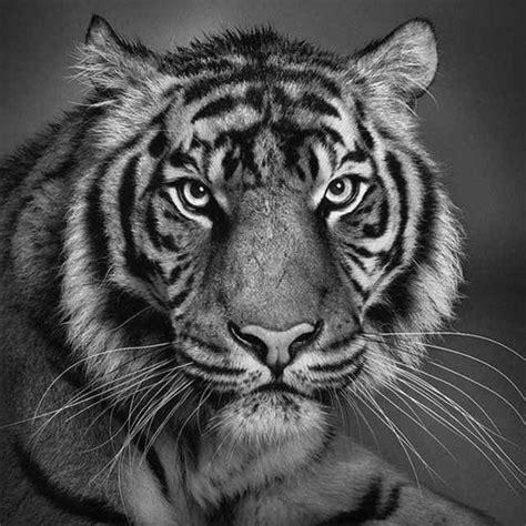 los mejores dibujos de animales dibujos de animales salvajes a lapiz los mejores