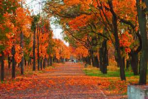 colors of autumn the rich colors of fall foliage autumn foliage images