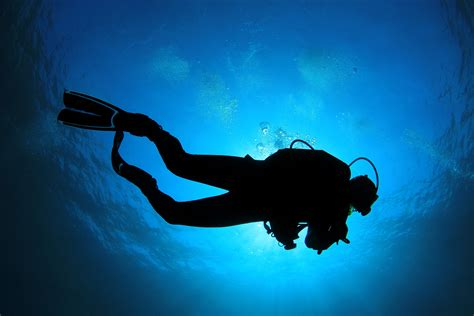dive card top 5 reasons to become a certified scuba diver