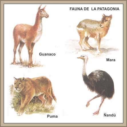 flora y fauna de la patagonia chilena reforestemos patagonia la patagonia caracter 237 sticas fauna suelo clima recursos