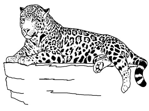Jaguar Coloring Pages jaguar animal coloring pages realistic coloring pages