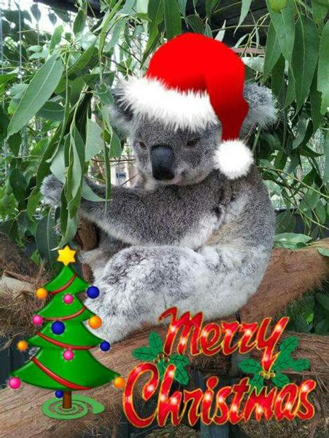merry christmas cute christmas koala bear pets  christmas pinterest koala bears