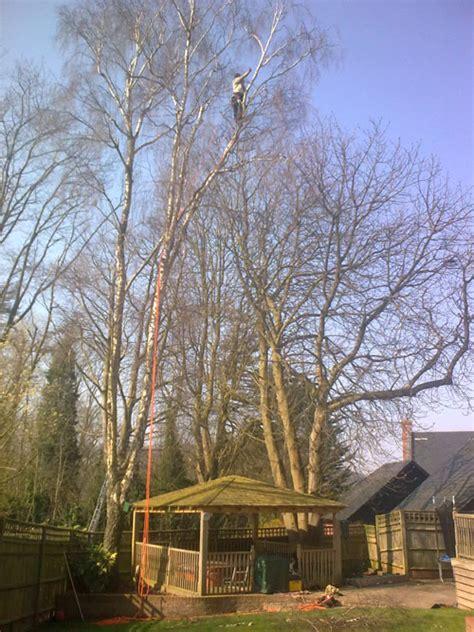 mr tree photos of work in progress