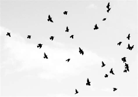 black and white wallpaper with birds black and white images of birds 5 high resolution