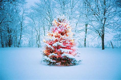 snowball lights for christmas tree images