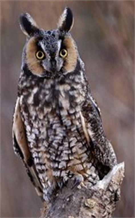 wisconsin owls identification birds