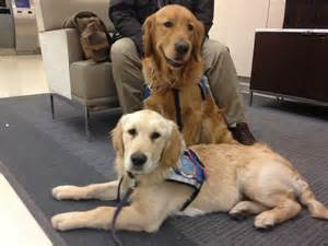 therapy dogs arrive in boston to comfort survivors of