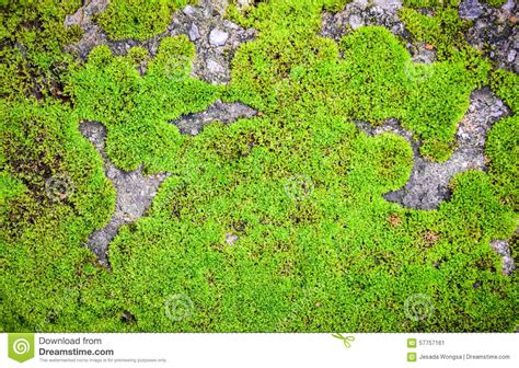 growth pattern in nature green moss on rock stock photo image 57757161