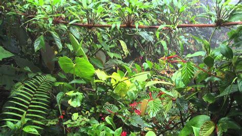 jungle natural sound  hours exotic jungle natural