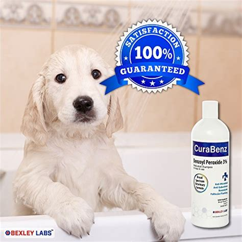 peroxide for dogs curabenz benzoyl peroxide shoo for dogs cats effective for mange seborrhea