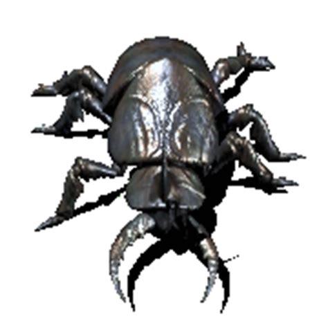imagenes gif grandes gif escarabajo goliat gifs e im 225 genes animadas