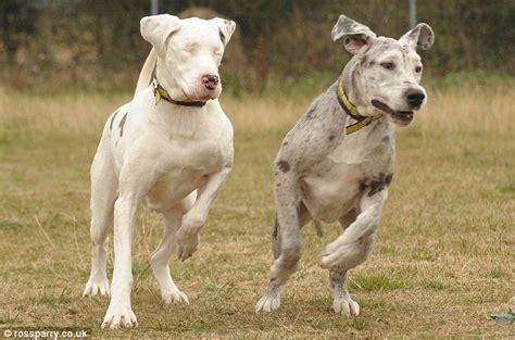 wann verlieren hunde ihre milchzähne die geschichte ein hund f 252 hrer der k 252 mmert sich um
