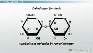 dehydration synthesis definition glycosidic bond description images femalecelebrity
