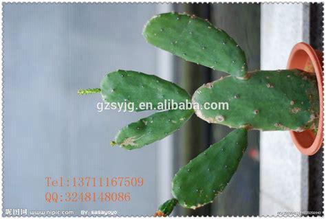 fico d india in vaso mini artificiale in vaso fico d india artificiale pianta