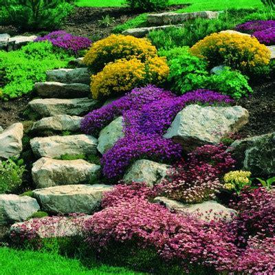 giardini rocciosi in ombra piante per giardino roccioso in ombra home visualizza