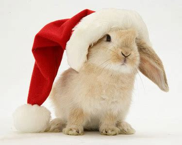 images of christmas rabbits santa to challenge decision to award present franchise to