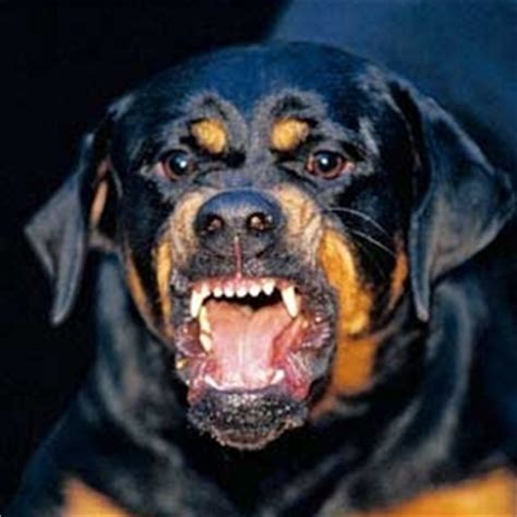 fear aggression rottweiler fear aggression