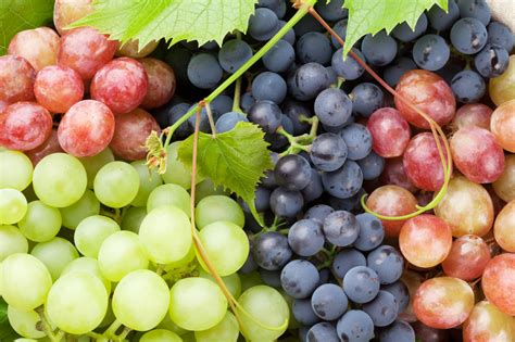 uva da tavola uva da tavola e uva da vino le differenze