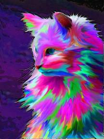 neon colorful cat graphic design all the colors of