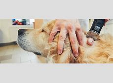 How to Prevent Lipomas in Your Dog Liver Failure In Dogs Causes For