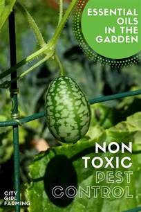 Non Toxic Garden Pest Control - in the garden non toxic pest control with essential oils city farming