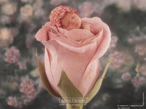 imagenes de rosas tiernas imagen tierna de bebe en la rosa