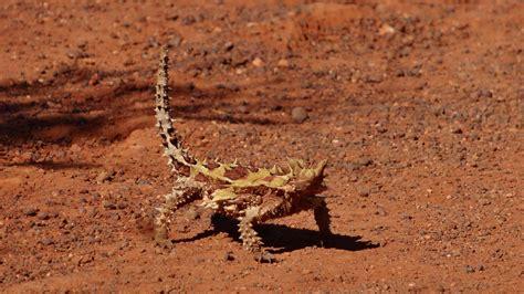 imagenes de animales del desierto animales del desierto 191 cu 225 les son 191 c 243 mo viven