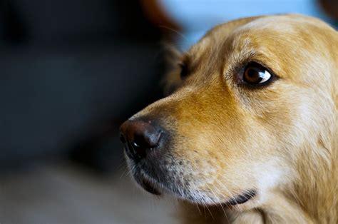high blood pressure in dogs understanding hypertension in pets high blood pressure in animals