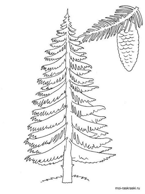 coloring page of redwood tree redwood tree coloring coloring pages