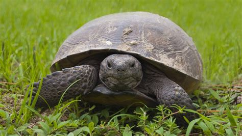Turtle From Creature Comforts by Mpb Mississippi Broadcasting