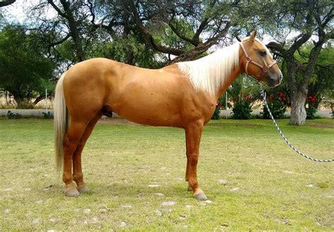 milanuncios caballos