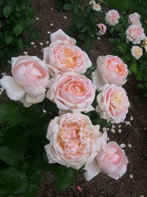 rose symbolism in the great gatsby pungent roses the great gatsby chapter i by f scott
