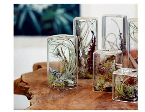 ideas  hanging flower pots indoor plants exhibit