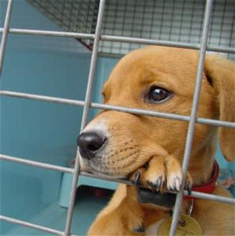 how much is it to adopt a puppy how much is that doggie in the window adoption guide