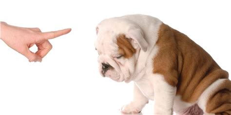 puppy potty tips how to potty puppy tips