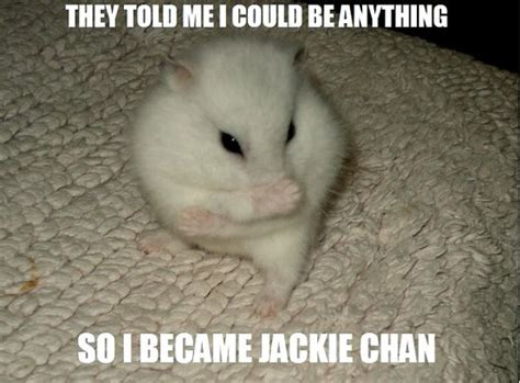 Funny Cute Animal Memes - december 2012 funny and cute animals