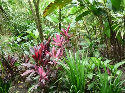 what are tropical plants gt tropical plants and central central gardening
