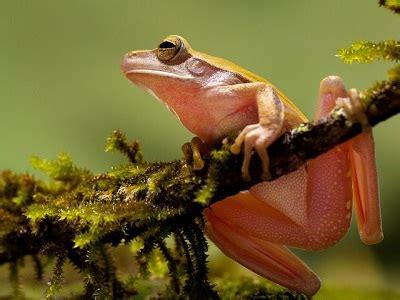 imagenes animales que respiran por la traquea animales que respiran por la piel queanimal