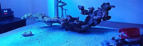 Reef Aquascaping Minimalist Aquascaping Page 5 Reef2reef Saltwater And