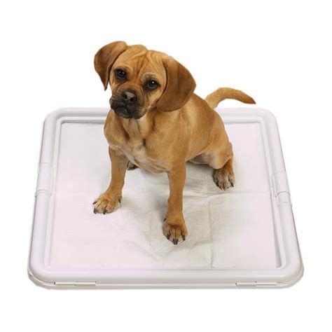 puppy pad tips top ten house breaking tips pooch pals