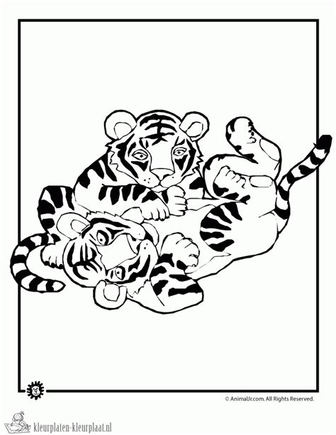 cute baby tiger colouring pages dark brown hairs