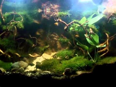 java moss aquascape java moss aquascape youtube