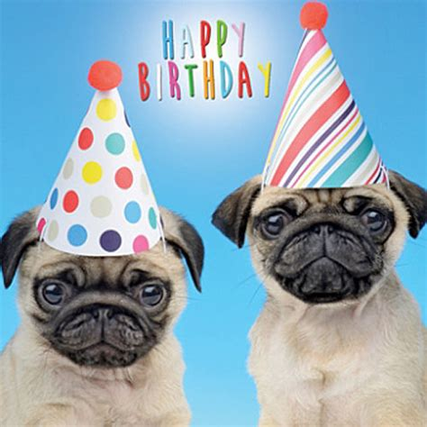pug puppy birthday pugs in hats birthday card pug greeting card ebay