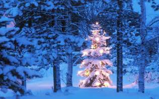 images of christmas outside 19 beautiful outdoor christmas tree hd desktop wallpapers
