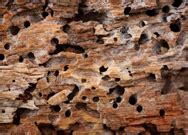 wood destroying insect certification emery home inspection